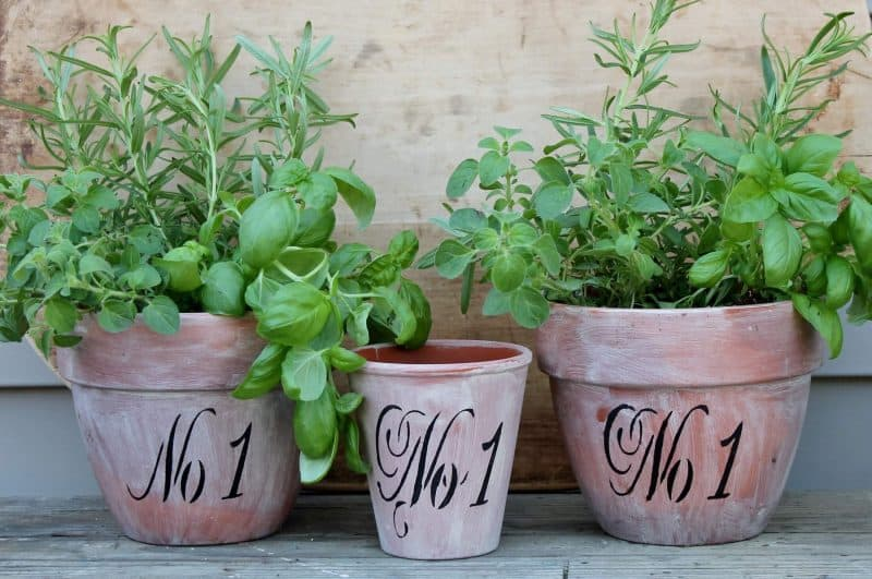 stenciled terra cotta pots with herbs