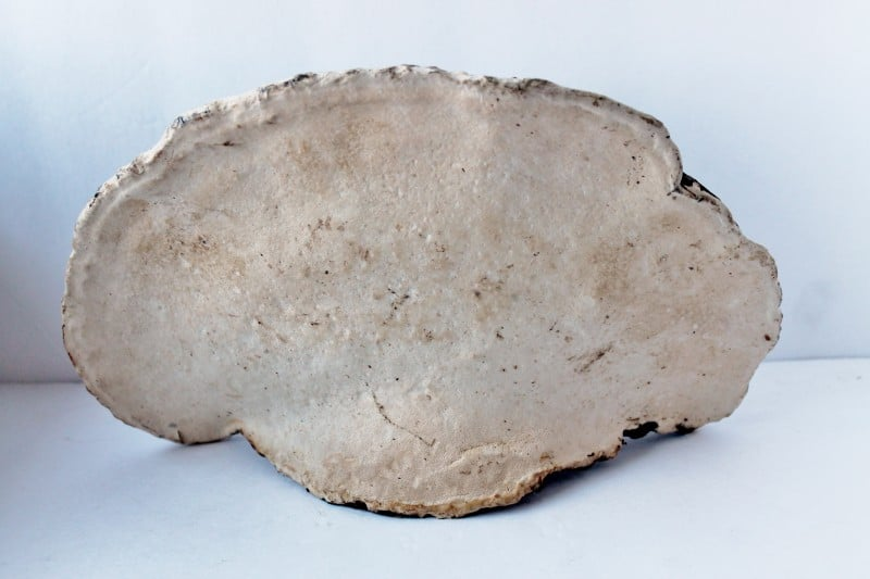 Lichen Natural History Nature