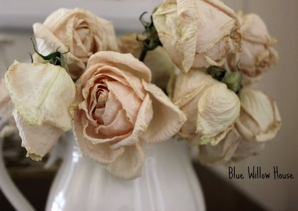 faded roses at Blue Willow House #34