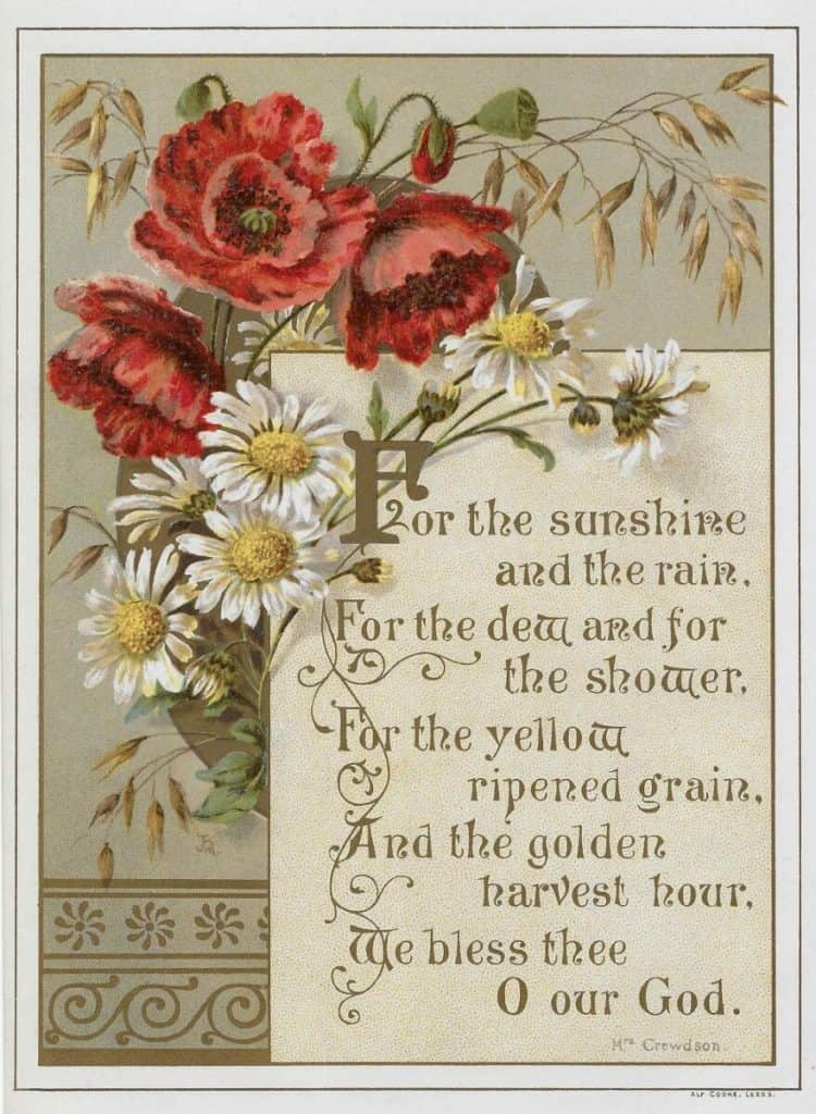 picture relating to Free Vintage Printable named Study the Victorian Which means of Bouquets + Cost-free typical