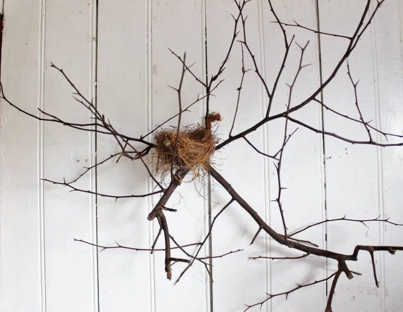 Natural History tree branch with nest